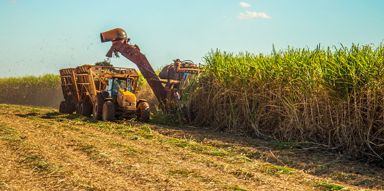truck harvesting sugar cane